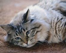 Katzenhaltung.org - Alles �ber Katzen