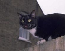 Katzen: Verhalten