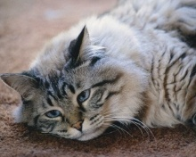 Katzenhaltung.org - Alles über Katzen