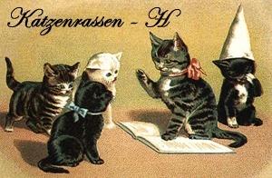 Katzenrassen: