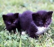 Katzenwelpen auf dem Weg zur Katze