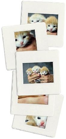 Katzenwelpen sind niedlich - Katzenzucht