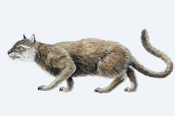 Prähistorische Katze - Darstellung